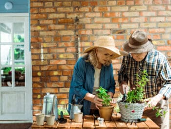 indoor gardening activities for elderly