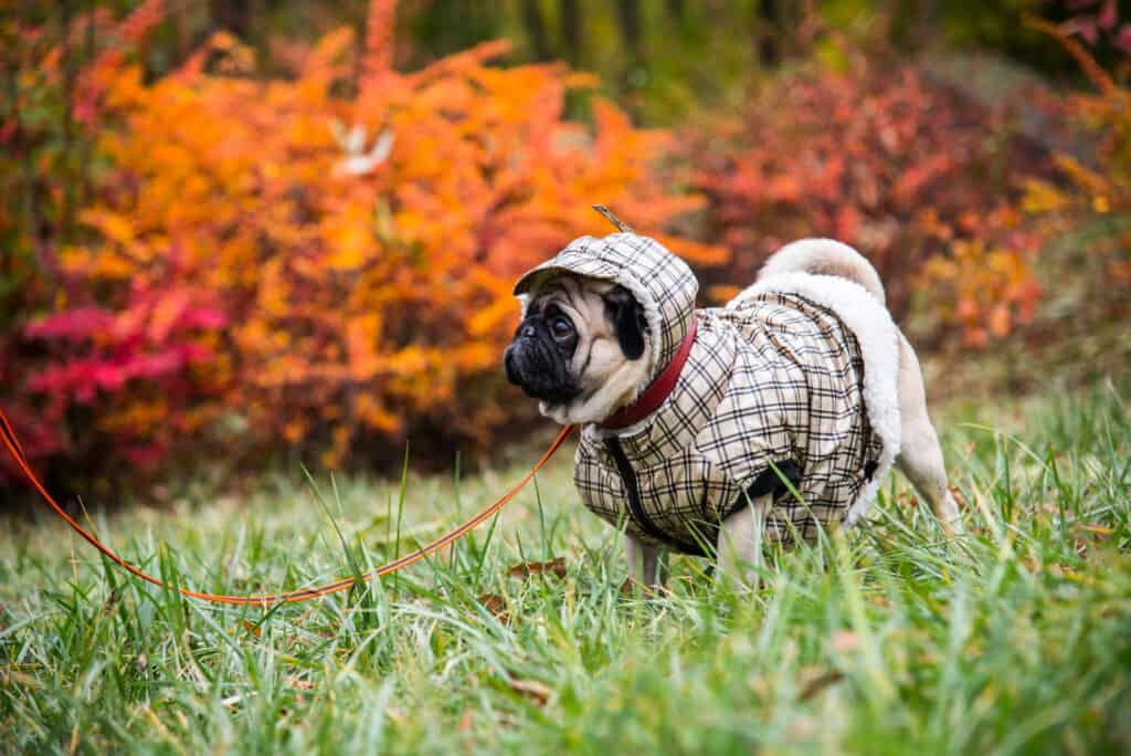 how to keep your dog warm while camping
