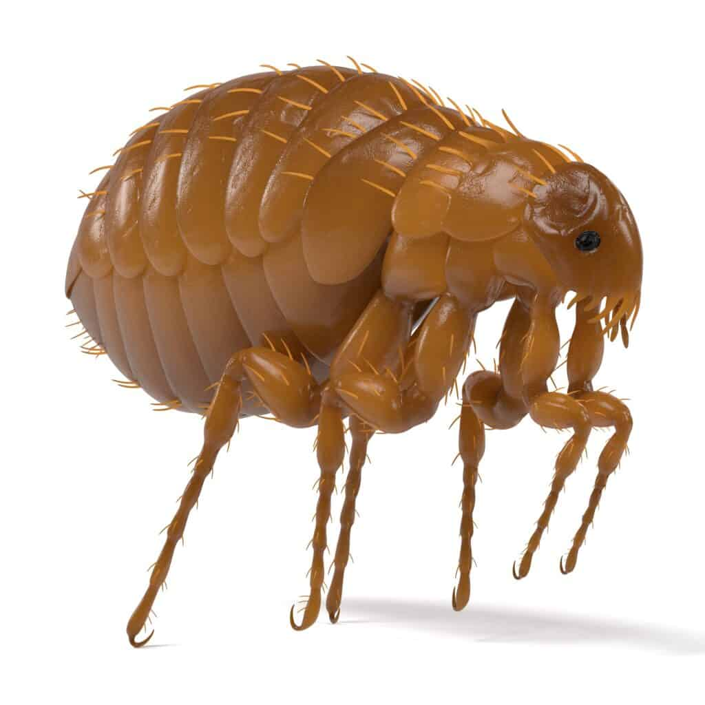 FAQ About Fleas On Dogs