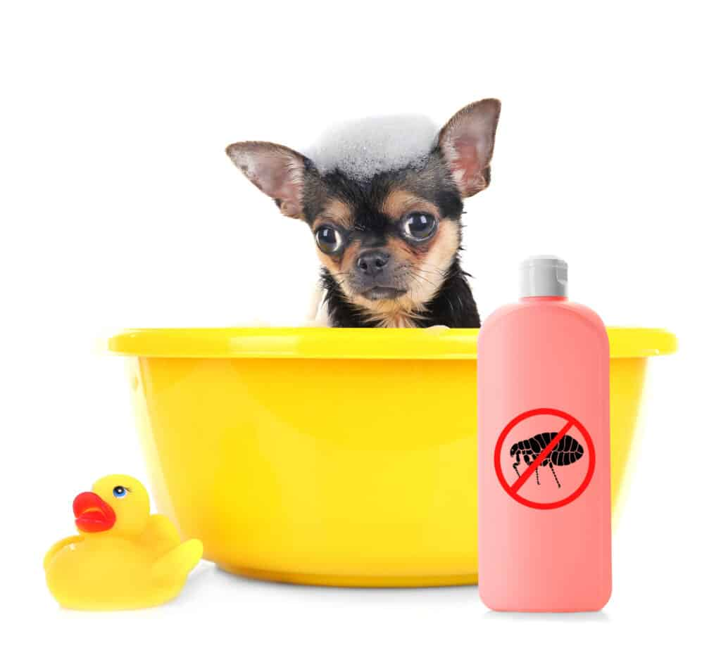 Natural remedies for dog fleas